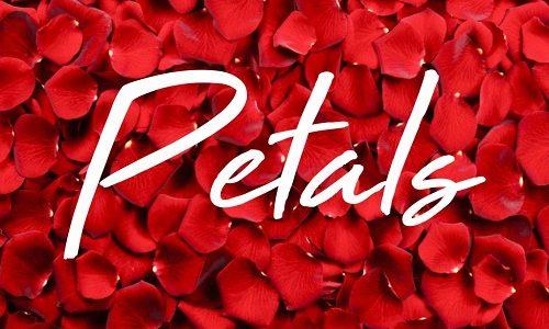 J Holiday Petals