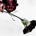 "John Legend ""Made to Love"" (Video)"